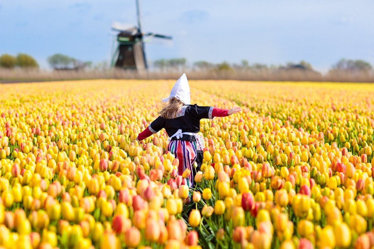 Little Dutch girl running through field of flowers toward windmill.