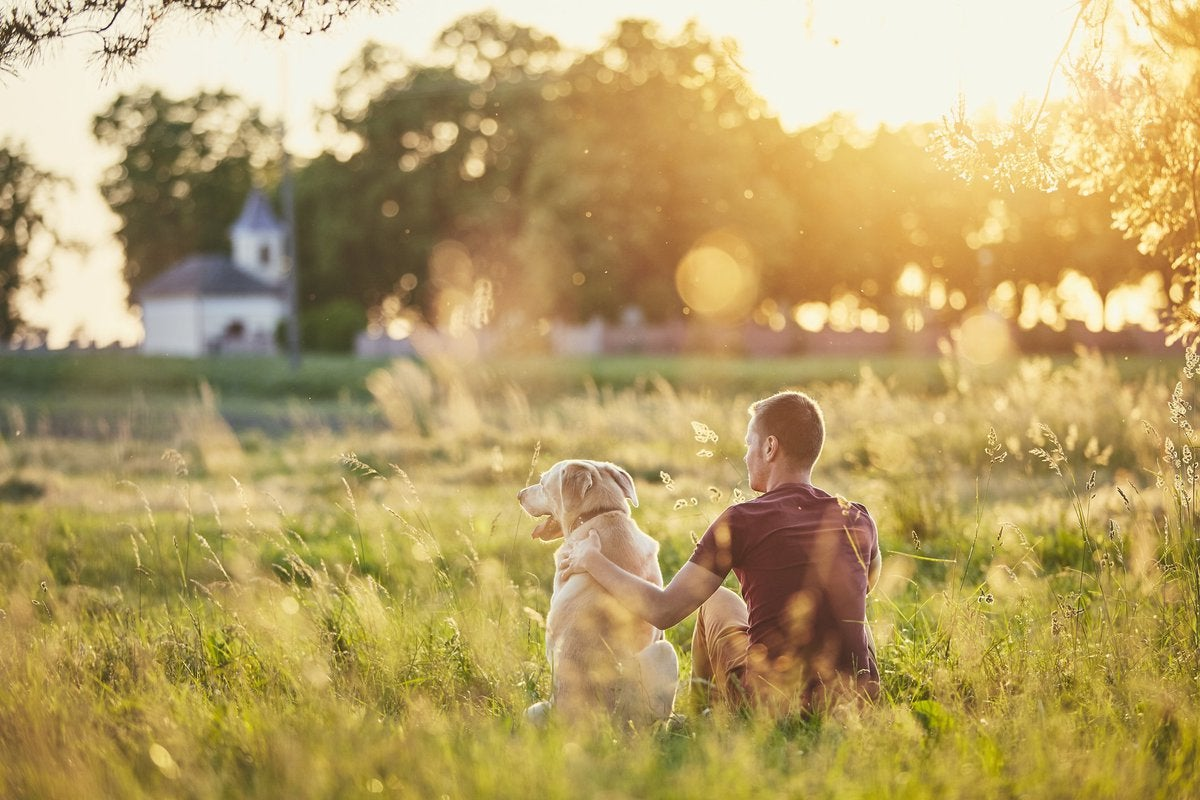 A man and a dog sitting in a grassy field at sunset.