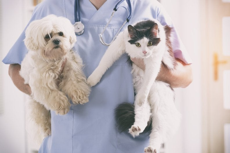 Vet holding a dog and a cat.