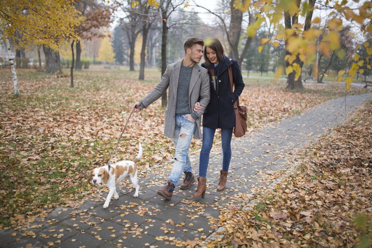 A young couple walking their dog through a park.