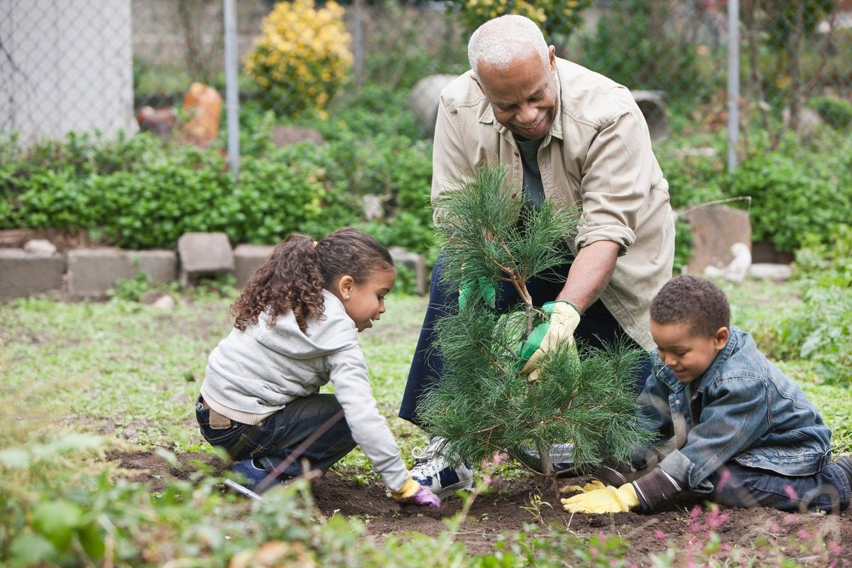 An older adult and two young children planting a small tree.