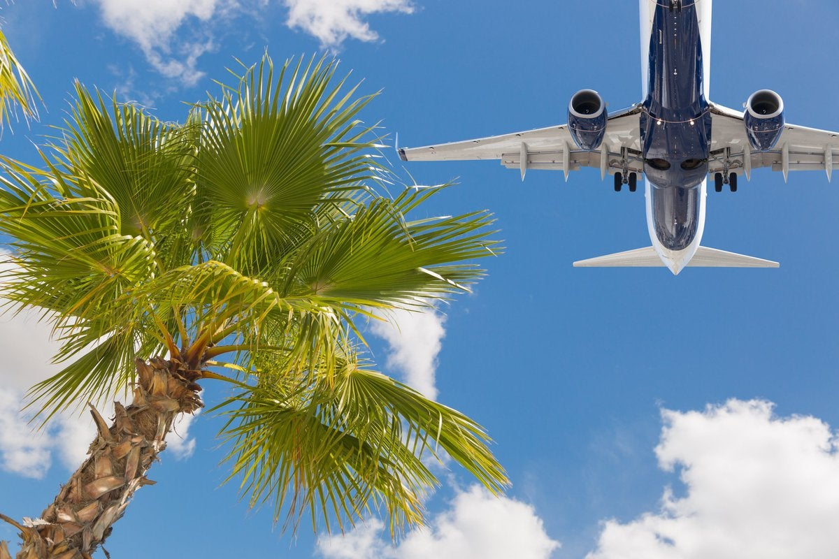 airplane flying over palm trees.