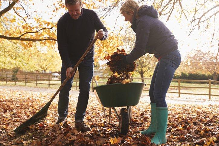 A man and woman raking fall leaves into a wheelbarrow.