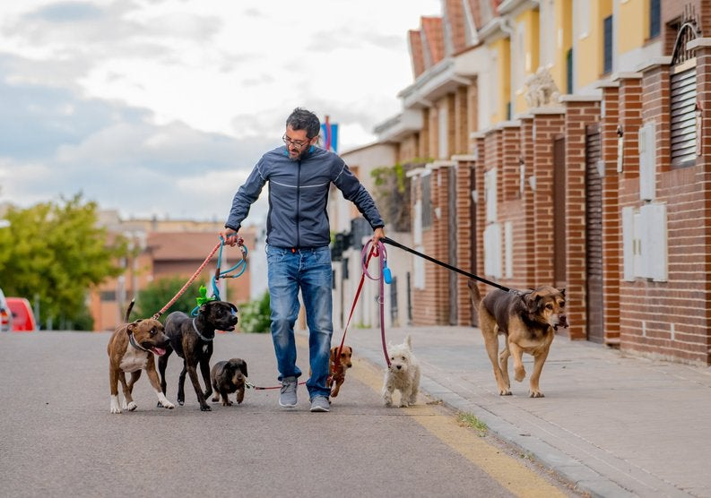 A man walking several dogs on leashes down the street.