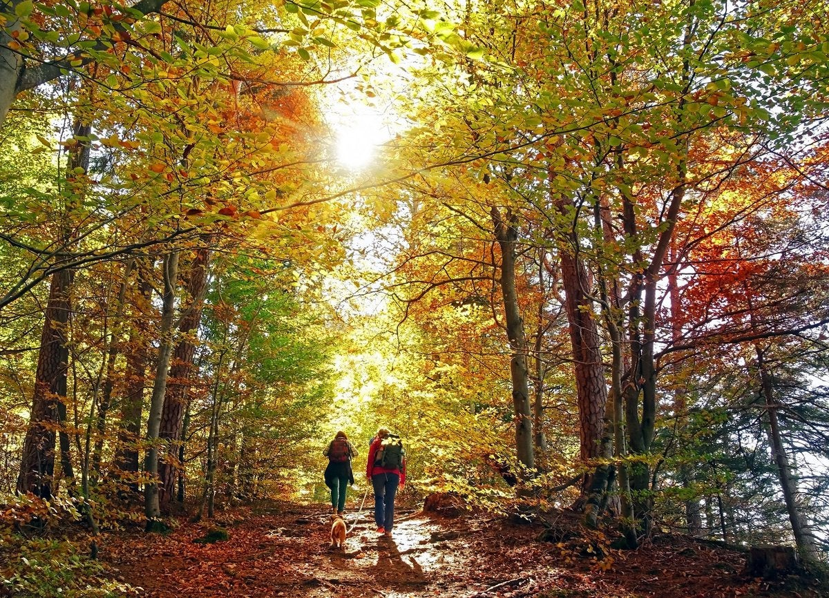 Two people hiking through sunny woods in autumn with their dog.
