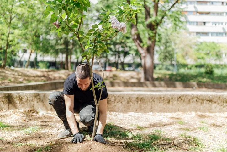 A man planting a tree in a park with larger trees behind him.