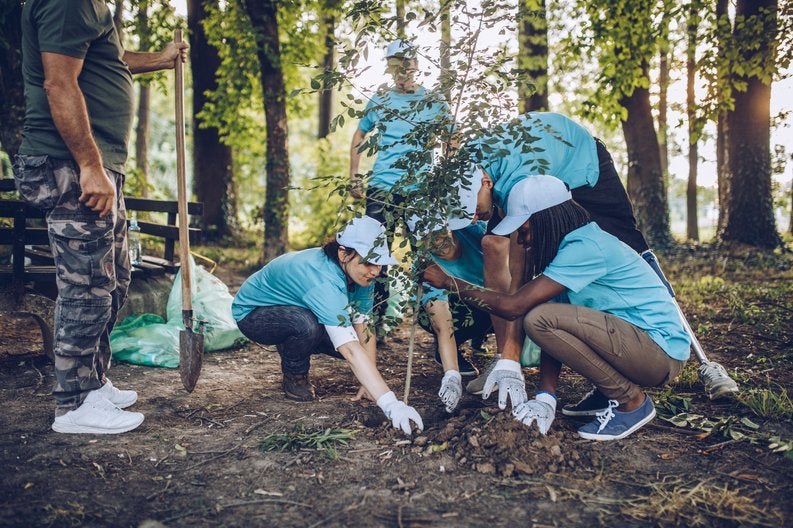 A group of volunteers planting a tree.