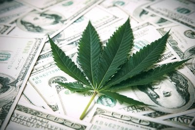 Fresh green marijuana leaf lies atop a loose pile of cash.