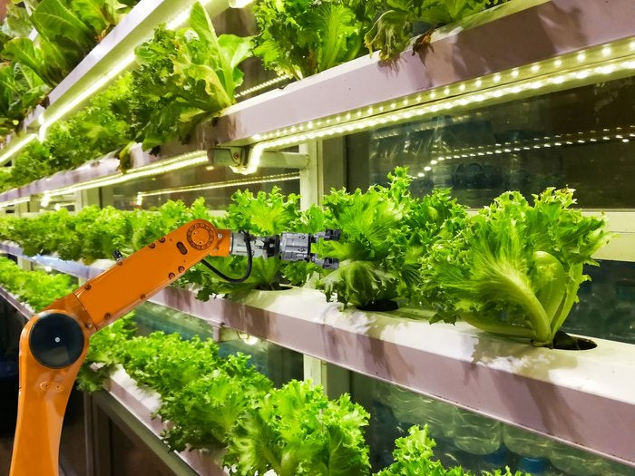 Robotic arm caring for lettuce plant in greenhouse