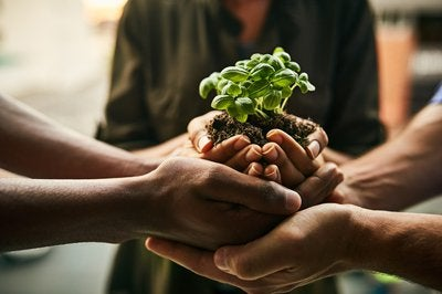 set of three people's hands holding dirt and plant