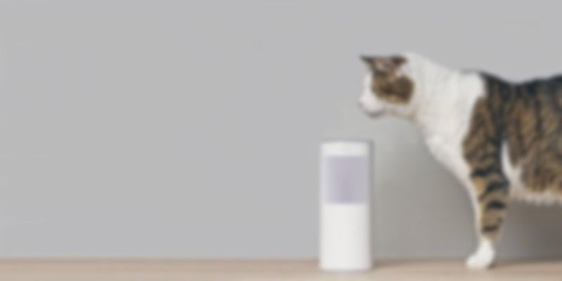 cat with smart home speaker