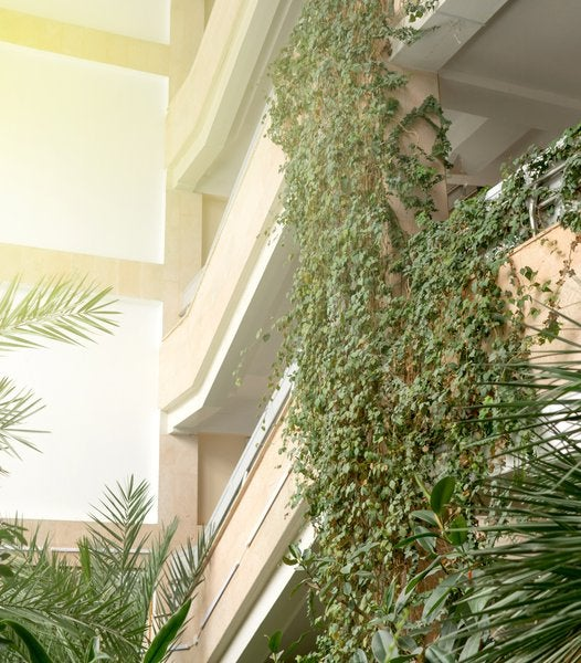 What is Biophilic Design and Why it is a Growing Trend?