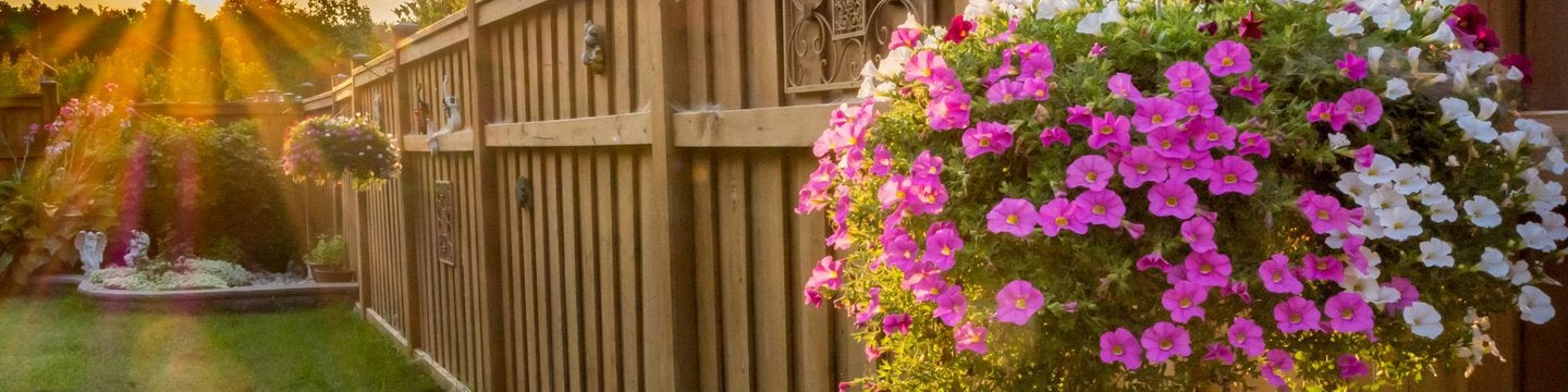 Fence with flowers and sunset