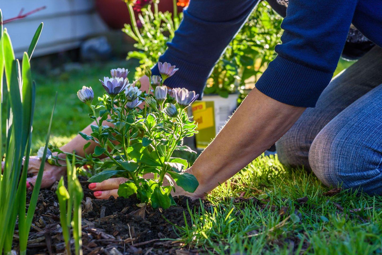 planting_flowers.jpg