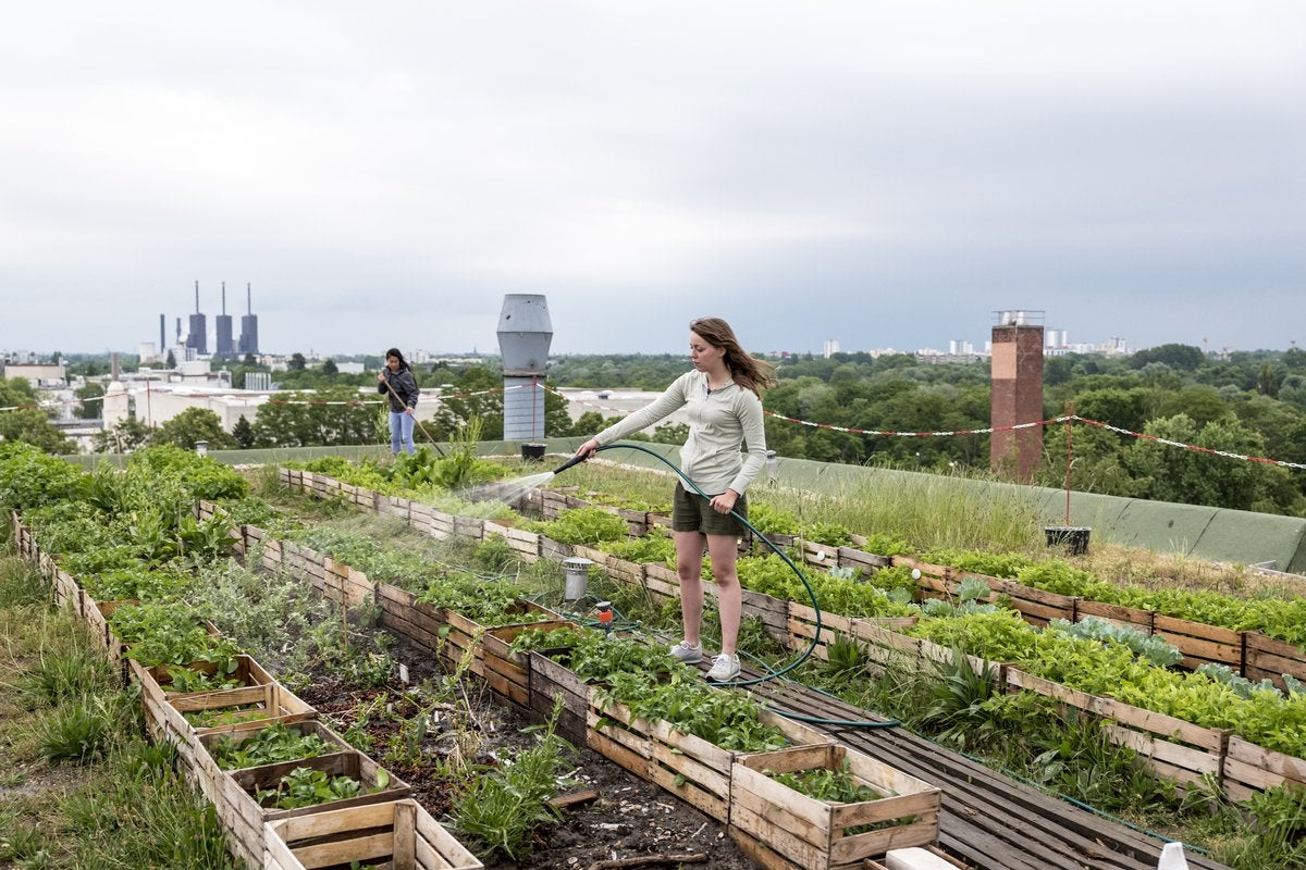 Image result for urban farming