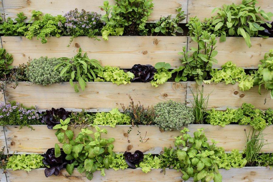 4 Vertical Garden Ideas To Help Get Your Garden Going