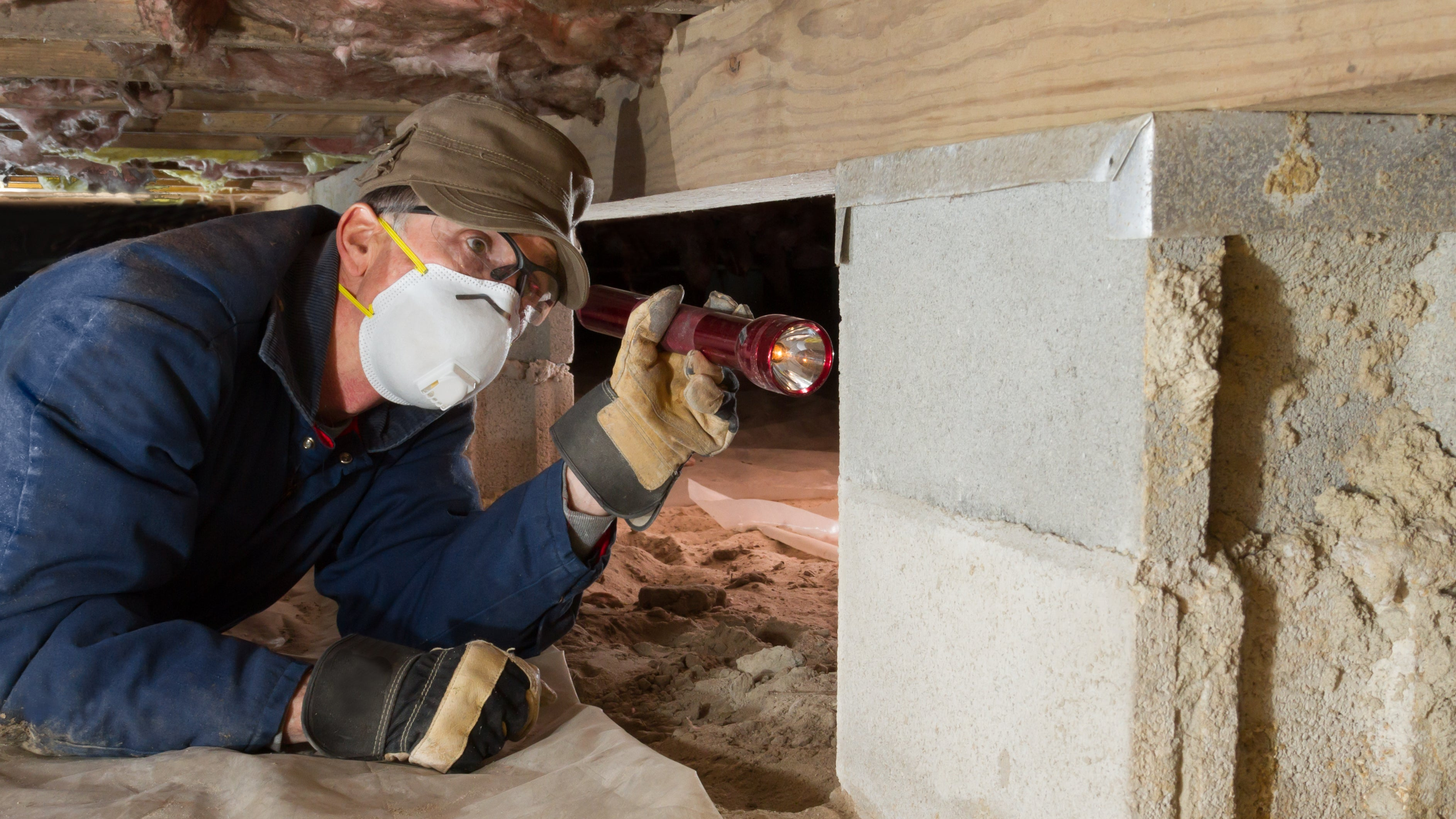 Termite Inspections What You Need To Know Millionacres