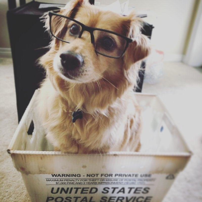 Presto! is Duguay and Sturba's 13-year-old golden retriever mix, but he occasionally stands in for the fictitious Brian in the shipping department.