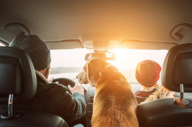 A family and their dog in a car on a road trip.